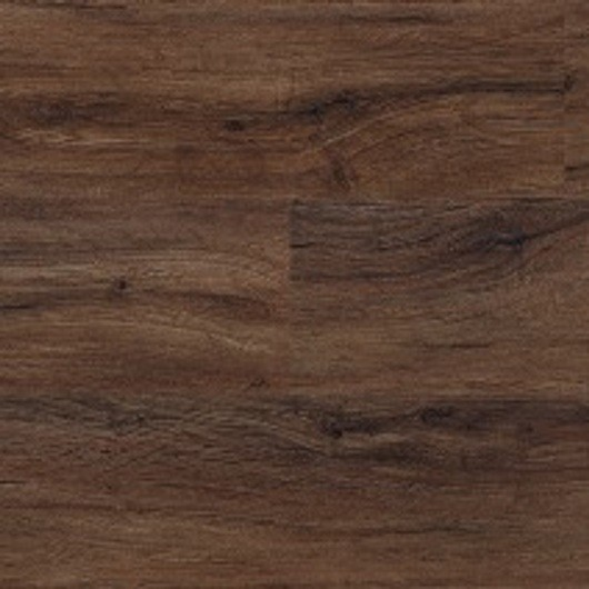 North American Walnut - 2236