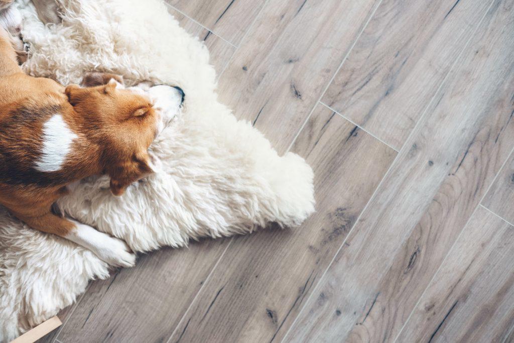Pet Friendly Flooring Options Which, Best Vinyl Flooring For Dogs Uk